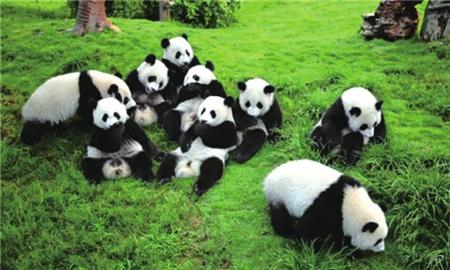 大熊猫国家公园管理局正式